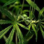 4 Reasons To Intake Marijuana Through Edibles